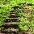 Stone walkway — Stock Photo #12074502