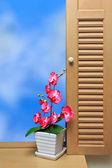 Flower & window — Stock Photo