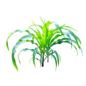 Corn plant isolated on white background — Stock Photo