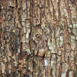 A texture of brown tree bark — Stock Photo