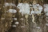 Sale rouillée mur vieux blanc — Photo