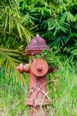 Red fire hydrant — Photo