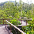 Stock Photo: Bridge through mangrove reforestation