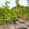 Foto de Stock  : Bridge through mangrove reforestation