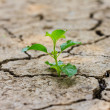 Green tree growing through dry cracked soil — Stock Photo #39288953