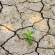 Green tree growing through dry cracked soil — Stock Photo #39289289