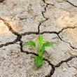 Stock Photo: Green tree growing through dry cracked soil