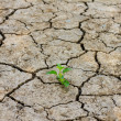 Green tree growing through dry cracked soil — Stock Photo