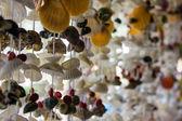 Sea shell gardin selektiv inriktning — Stockfoto
