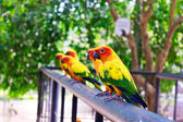 Beautiful colorful parrot — Stockfoto