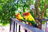 Magnifique perroquet coloré — Photo