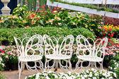 White chair in the garden  — Stock Photo
