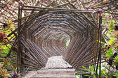 Bamboo Tunnel in the garden. — Stock Photo