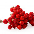 Rowanberries — Stock Photo