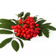 Rowanberries with leaves — Stock Photo #12534179