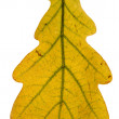 Single oak leaf — Stock Photo
