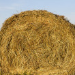 Stock Photo: Sheaf of hay