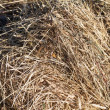 Stock Photo: Sheaf of hay closeup
