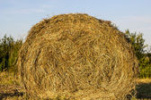 Sheaf of hay — Stock Photo