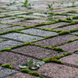 Paving stone with moss and grass — Stock Photo