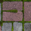 Background from paving stone with moss and grass — Stock Photo
