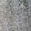 Granite texture with moos — Stock Photo