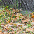 Stock Photo: Tree trunk close up with leaves on grass