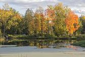 Paisagem de outono na lagoa — Foto Stock