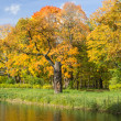 Autumn landscape on the pond bank - Stock Photo
