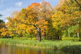 Autumn landscape on the pond bank — Stock Photo