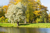 Autumn landscape with a willow tree in the foreground — Stock Photo