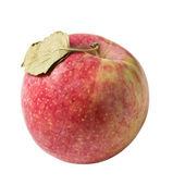 Jablko s listy — Stock fotografie