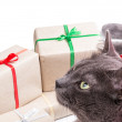 Cat thinking about gifts — Stock Photo