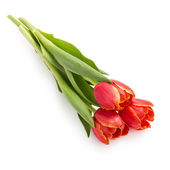 Three beautiful tulips — Stock Photo