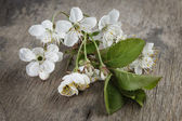 Blossom cherry branch on wooden plank — Stock Photo