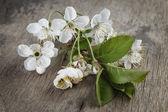 Ramo fiore ciliegio su tavola di legno — Foto Stock
