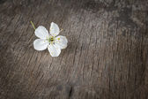 Blossom cherry flower on wooden plank — Stock Photo
