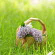 Lilac flowers in birchbark basket on grass — Stock Photo