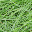 Fresh wet grass after rain — Stock Photo