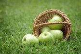 Wicker basket full of green apples — Stock Photo