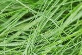 雨后的鲜湿的草 — 图库照片