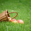 Wicker basket full of gala apples — Stock Photo