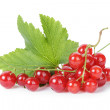 Stock Photo: Fresh ripe redcurrant with leaf