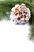 Kerstboom takje met kegel samenstelling — Stockfoto