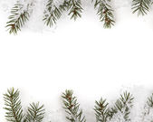 Christmas tree twig composition — Stock Photo