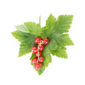 Fresh ripe redcurrant with leaf — Stock Photo