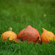 Three Halloween pumpkins on green grass — Stok fotoğraf