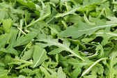 Fresh arugula — Stock Photo