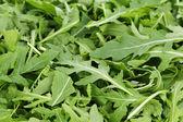 Fresh arugula — Stock Photo