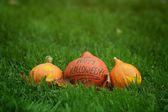 Three Halloween pumpkins on green grass — 图库照片